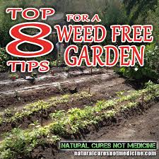 how to kill weeds in garden. 993ed-8-tips-weed-free-garden how to kill weeds in garden