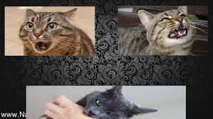 best natural flea treatment for cats