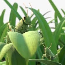 green grass field animated. Grasshopper Rigged Animated In Grass Field Green R