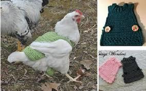 Chicken Sweater Pattern Mesmerizing Chicken Sweater Crochet Patterns Home Design Garden