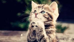 Les chats sont-ils hypocrites ? | Cerveau & Psycho