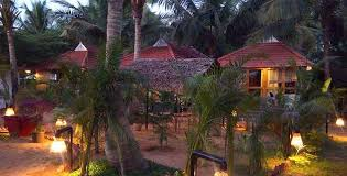 palm tree resort location yoga teacher goa
