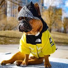 Dog Windbreaker Clothes French Bulldog ...