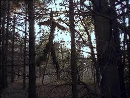 Пять признаний в любви Ведьме из Блэр Кино на Фильм ру Кадр из фильма Ведьма из Блэр Курсовая с того света