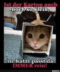 Die 99 Besten Bilder Von Katzen Sprüche In 2019 Lustige Katzen