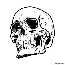 Skull Vector Illustration Collection Of Hand Drawn Halloween Hard