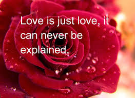 Beautiful Red Rose Quotes Best Of Red Rose Wallpaper With Love Quotes 24 Wallpapers