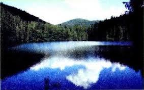 Водная среда обитания Особенности Природоведение Реферат  Озеро Синевир