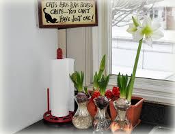 Little Kitchen Little Kitchen Garden The Paperwhite Is Blooming A Homespun