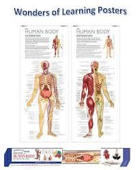 Wall Chart Of Human Anatomy Wonders Of Learning Human Body Wall Chart