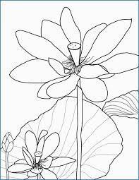 Tuyển tập các bức tranh tô màu hoa sen đẹp nhất cho bé tô màu – Chiase24.com