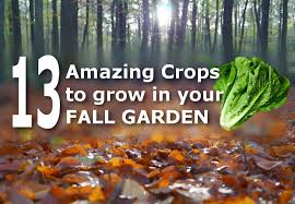 Growing Fall Vegetables In South Carolina Fall Vegetable Gardening Fall Garden Crops