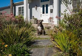 visit often as we upload information and pix from our 20 highlighted sustainable gardens meet our official mascots mr beau finnegan left and ms bru