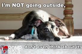Bildresultat för dogs who hate rain