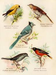 Vintage British birds illustration Ilustraciones Pinterest.