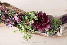 Pack the succulents in tightly to your driftwood planter
