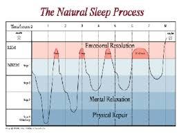 Rem Sleep Chart Pin On Medical