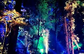 descanso gardens enchanted forest is perfect for families date night with someone special or a place to enjoy the holiday season with friends