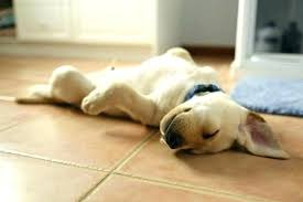 pet proof area rugs medium size of rug pad friendly bedroom flooring ideas dog best washable