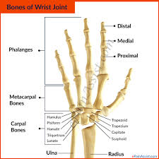 types of joint movements. the three sections of wrist joint are as follows- types movements
