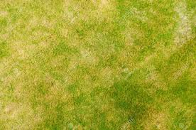 grass field from above. Field Of Grass View From Above Stock Photo - 33240330 Field 123RF.com