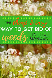 do you wish there was a low maintenance way to keep weeds and grass out of