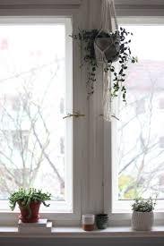 Deko Minimalistisch Fenster Altbau Pflanzen G