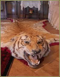 impressive real tiger rug skin with head roselawnlutheran