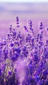 iPhone Lavender Aesthetic Wallpapers ...