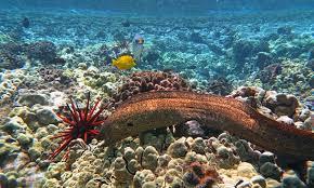 Maui Snorkeling Guide Ebook