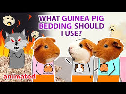 what guinea pig bedding should i use
