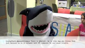 simmons college mascot. interview with stormy the shark simmons college mascot