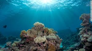 marine life threatened