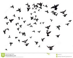 birds flying in the sky silhouette.  Birds Many Birds Flying In The Sky Throughout Birds Flying In The Sky Silhouette