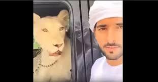 video prince hamdan and his pets