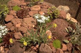 small rock garden full of plants