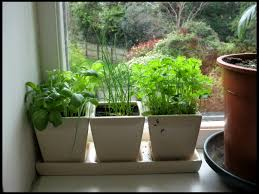 Small Picture garden ideas Enchanting Indoor Garden Design Alternative
