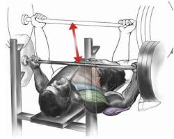 reverse grip bench press muscles worked. first off, you want to establish a solid underhand grip moving the bar forward for. in conventional bench press reverse muscles worked l