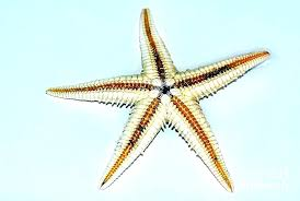 metal starfish wall art awesome decor image seaside surf decoration