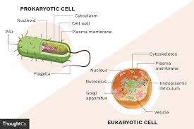 What Are The Differences Between Prokaryotes And Eukaryotes