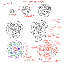 Small Picture How to draw roses and peonies Peony Google search and Google
