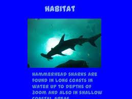 hammerhead shark habitat.  Hammerhead And Hammerhead Shark Habitat N
