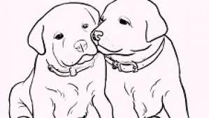 I Cuccioli Da Colorare E Disegnare Di Rachael Hale Colorare