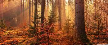 Autumn Forest Path Wallpapers ...