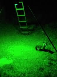 Kill Light Com Burnt That Pig Up Texasbowhunter Com Community Discussion
