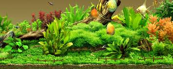 533+ Best HD Aquarium Wallpapers, 2806802 2560x1024
