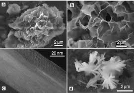 Sem Examples Examples Of Sem A B D And Tem C Photomicrographs Of The