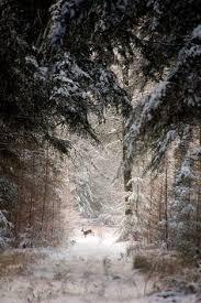 Новый год: лучшие изображения (98) | Святки, Рождественские ...