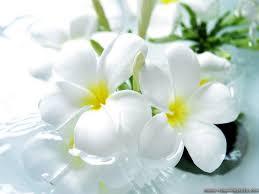 beautiful flowers wallpapers 1024x768
