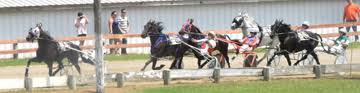 Entries up significantly in harness races   Free Press Standard